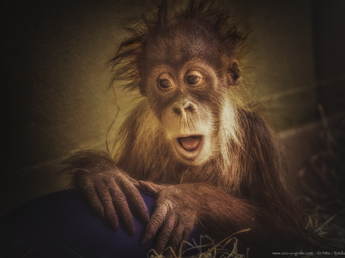 Huch!?! - Tierpark Hellabrunn - ©zoo-o-grafie - AWa