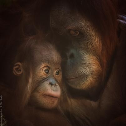 Kleiner Tröster - Tierpark Hellabrunn - ©zoo-o-grafie - AWa