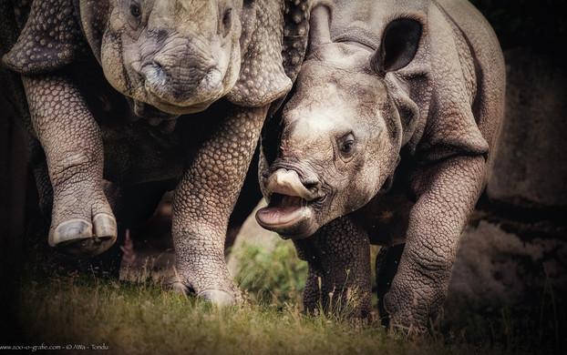 Mutter jagen - Tierpark Hellabrunn - ©zoo-o-grafie - AWa