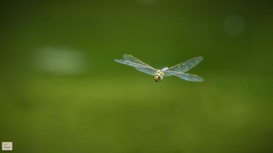 Fliegender Mann - Botanischer Garten München - ©zoo-o-grafie - AWa