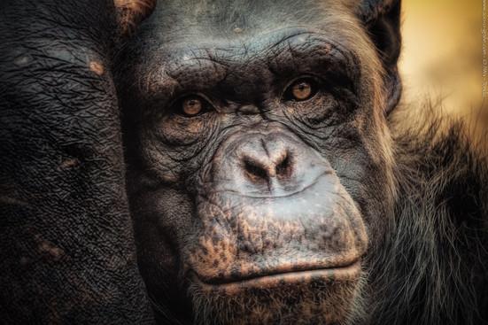 Nachdenklich - Tierpark Hellabrunn - ©zoo-o-grafie - AWa