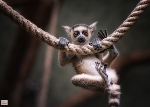 Hi Fans! - Tierpark Hellabrunn - ©zoo-o-grafie - AWa