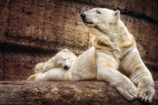 Mamakissen - Tierpark Hellabrunn - ©zoo-o-grafie - AWa