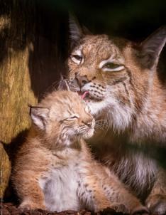 Mutterliebe - Tierpark Hellabrunn - ©zoo-o-grafie - AWa