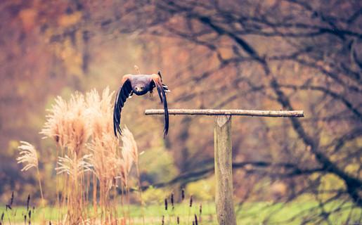 Herbstflieger - Tierpark Hellabrunn - ©zoo-o-grafie - AWa
