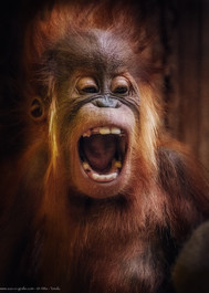 Yeah! - Tierpark Hellabrunn - ©zoo-o-grafie - AWa