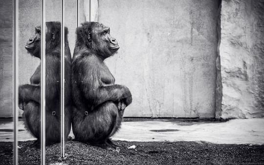 Lady Boss - Tierpark Hellabrunn - ©zoo-o-grafie - AWa