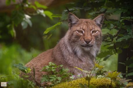 Merlin - Tierpark Hellabrunn - ©zoo-o-grafie - AWa