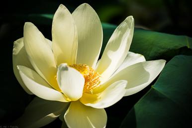 Blütengöttin - © zoo-o-grafie - AWa