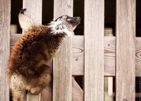 Türhänger - Zoo Augsburg - ©zoo-o-grafie - AWa