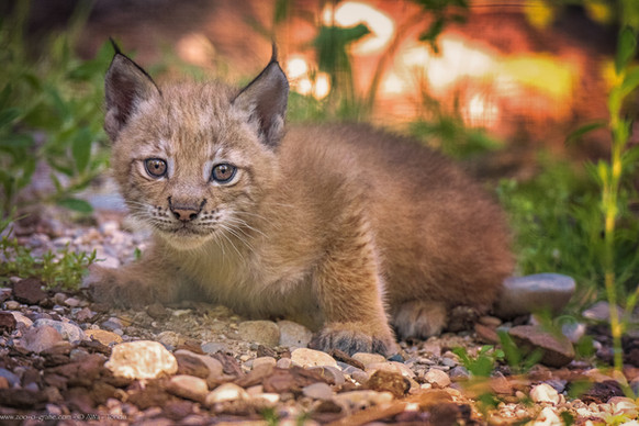 Miez Miez - Tierpark Hellabrunn - ©zoo-o-grafie - AWa