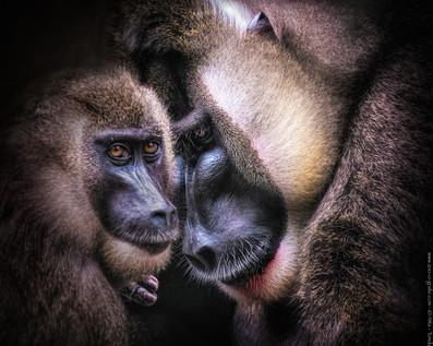 Familienszene - Tierpark Hellabrunn - ©zoo-o-grafie - AWa