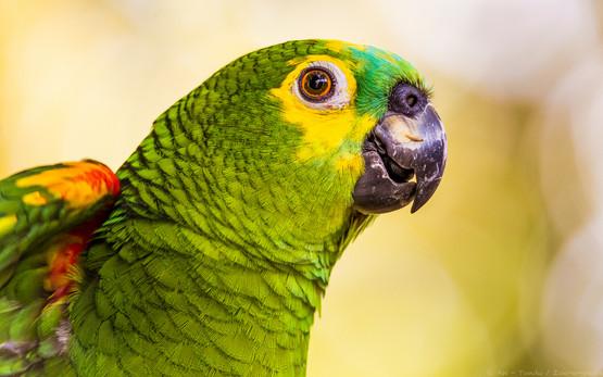 Amazone - Tierpark Hellabrunn - ©zoo-o-grafie - AWa