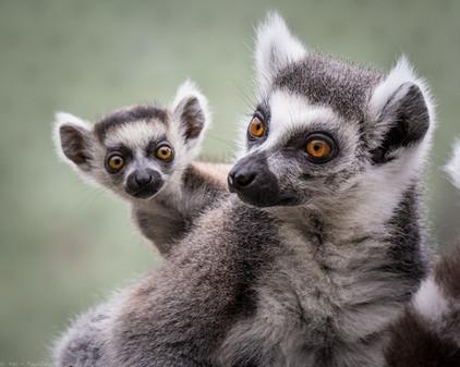 Guckst du!?! - Tierpark Hellabrunn - ©zoo-o-grafie - AWa