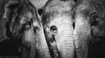 Damenkränzchen - Tierpark Hellabrunn - ©zoo-o-grafie - AWa