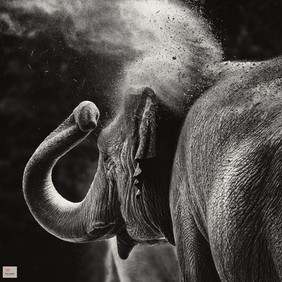 Dust - Tierpark Hellabrunn - ©zoo-o-grafie - AWa