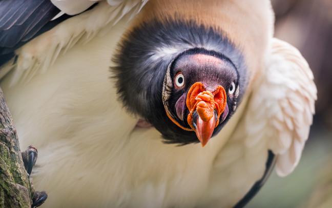 Neugierig - Tierpark Berlin - ©zoo-o-grafie - AWa