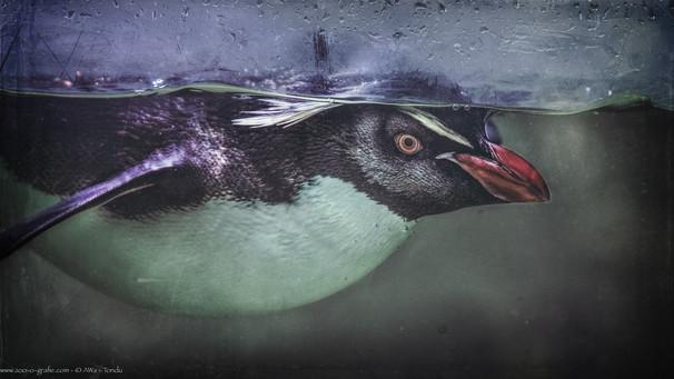 Der Beobachter - Tierpark Hellabrunn - ©zoo-o-grafie - AWa