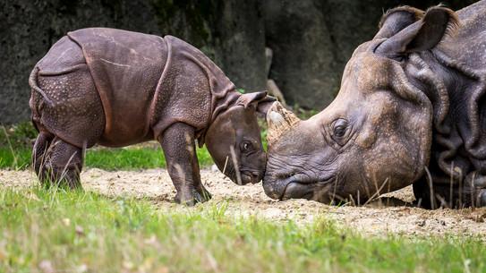 Kleiner Wilder - Tierpark Hellabrunn - ©zoo-o-grafie - AWa