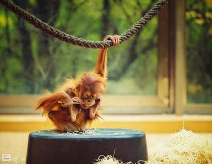 Arbeitshaltung - Tierpark Hellabrunn - ©zoo-o-grafie - AWa