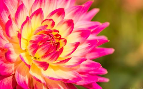 Pinke Sonne - © zoo-o-grafie - AWa