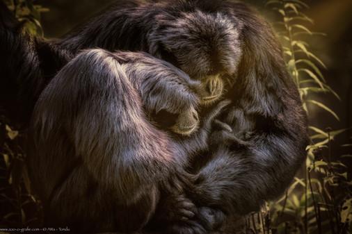 Liebespaar - Tierpark Hellabrunn - ©zoo-o-grafie - AWa