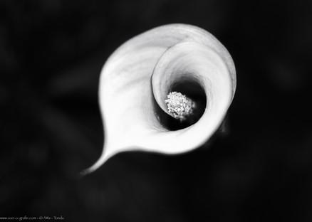 Malstrom - Botanischer Garten München - @zoo-o-grafie - AWa