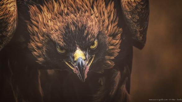 Achtung! Wild! - Tierpark Hellabrunn - ©zoo-o-grafie - AWa