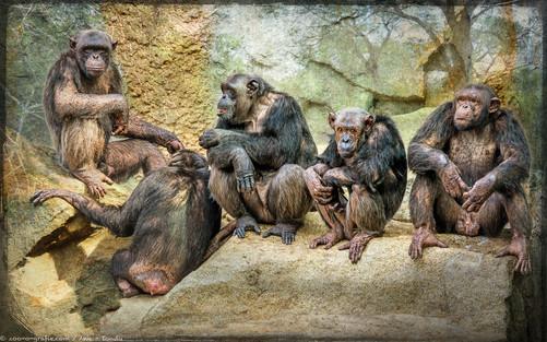 Meeting - Tierpark Hellabrunn - ©zoo-o-grafie - AWa