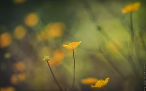 Zartes Gelb - Botanischer Garten München - @zoo-o-grafie - AWa