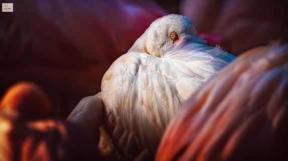 Mit einem Auge - Tierpark Hellabrunn - ©zoo-o-grafie - AWa