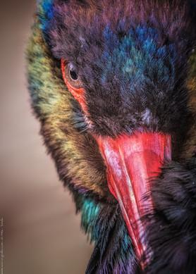 Bunt ist das neue Schwarz - Tierpark Hellabrunn - ©zoo-o-grafie - AWa