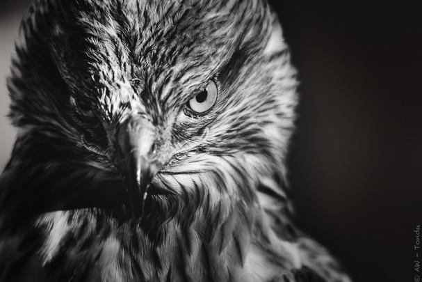 Angst?!? - Tierpark Hellabrunn - ©zoo-o-grafie - AWa