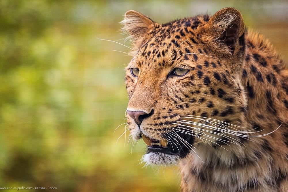 Julius - Tierpark Hellabrunn - ©zoo-o-grafie