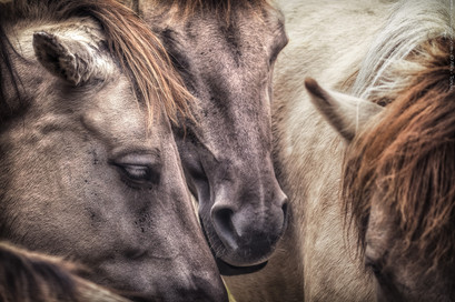 In der Herde - Tierpark Hellabrunn - ©zoo-o-grafie - AWa