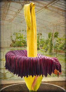 Geknickter Riese - Botanischer Garten München - @zoo-o-grafie - AWa