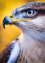 Kian - Tierpark Berlin - ©zoo-o-grafie - AWa