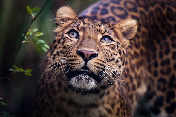 Julius - Tierpark Hellabrunn - ©zoo-o-grafie - AWa