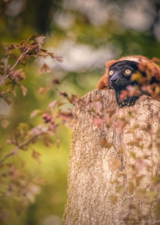 Erwartung - Tierpark Hellabrunn - ©zoo-o-grafie - AWa