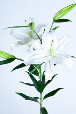 Crystal Blanca