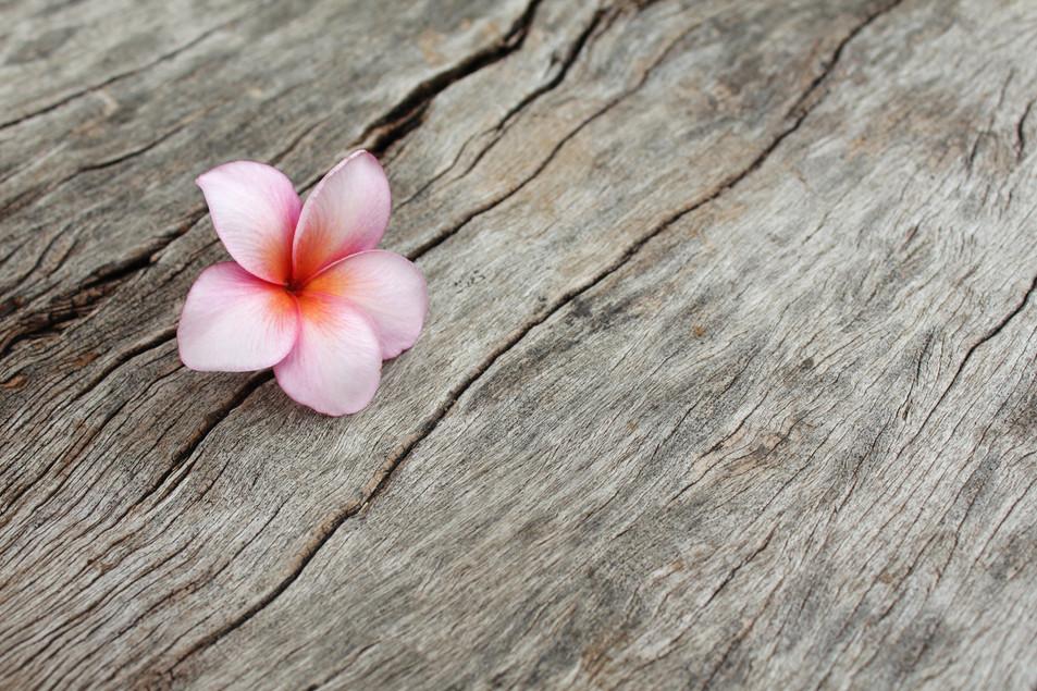 plumeria-flower-PSMKBMG.jpg