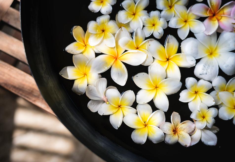frangipani-flowers-at-a-spa-salon-U2E8RYV.jpg