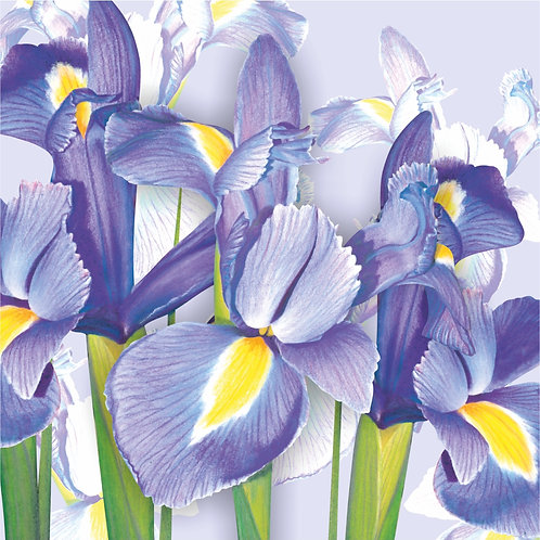 Flower Art / Floral Greeting Card 'Springtime Irises'