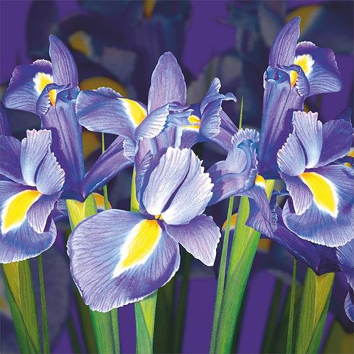 Flower Art / Floral Easter Card 'Easter Irises'