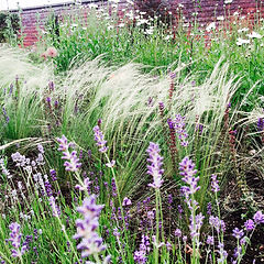 medicine garden