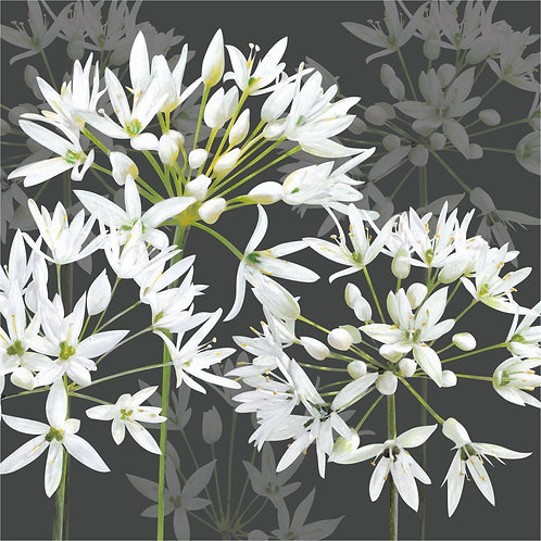 Flower Art / Floral Greeting Card 'Ramsons' (Or Ransoms, or Wild Garlic)
