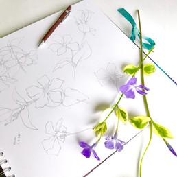 Vinca drawing