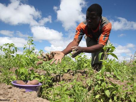 Africa and Zero Hunger (SDG 2).