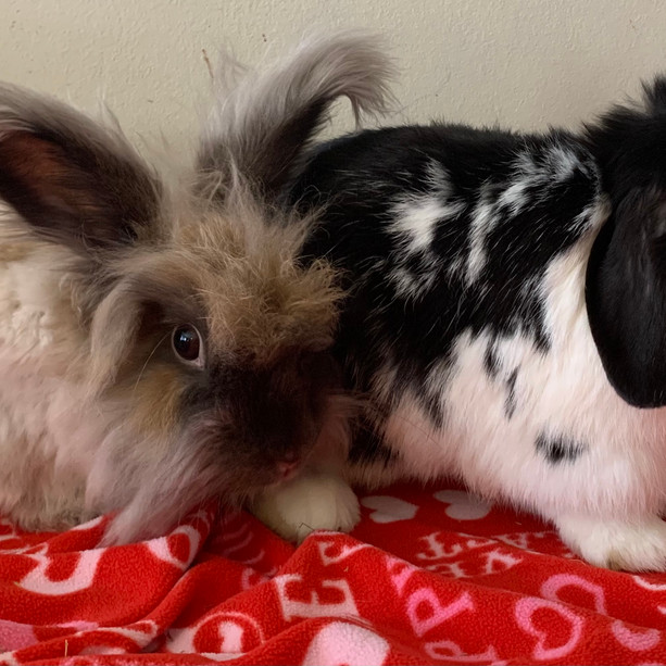 Bonded Pair and Needing a Home