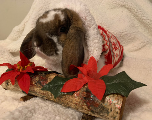 Cinnamon and his Winter's Coat